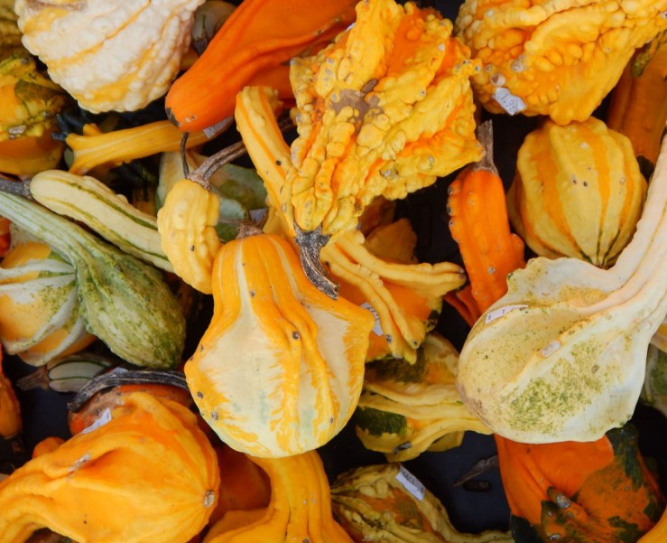 Seasonal gourds at the local market